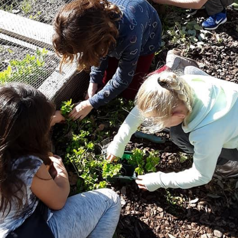 Kids gardening at schools in San Luis Obispo and Santa Barbara Counties with programs from One Cool Earth